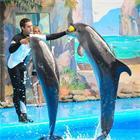 Дельфинарий Одесса